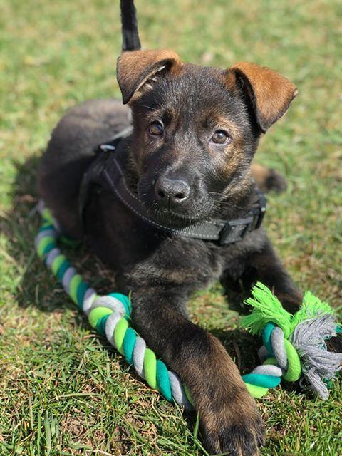 lux joy pup 3